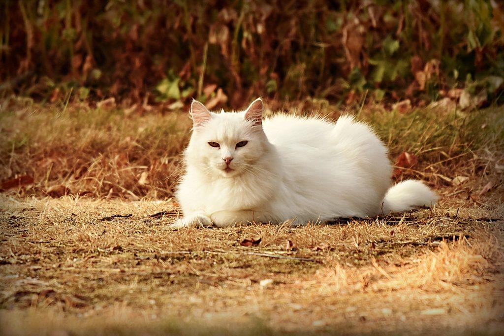 Katze und Wühlmausgift