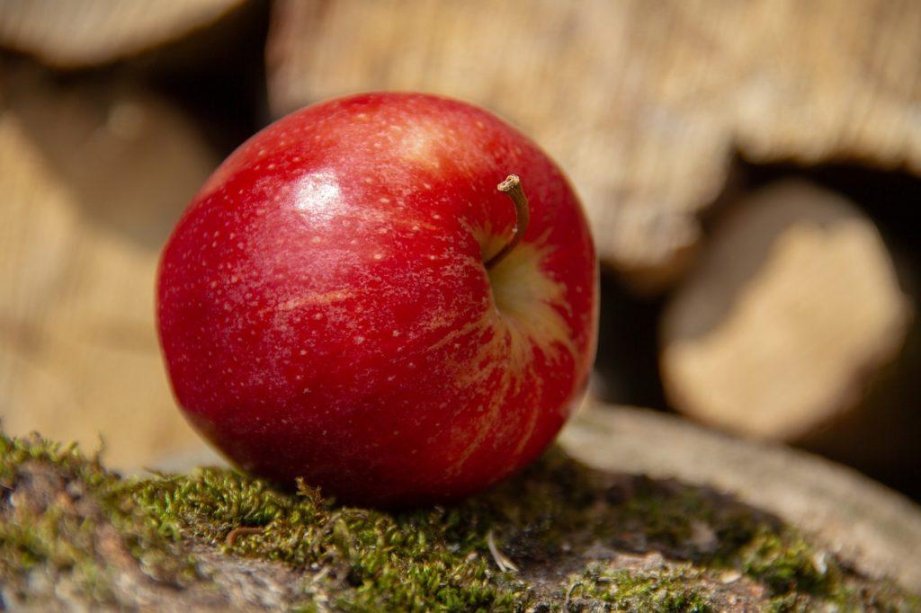 Wühlmausköder mit Apfel