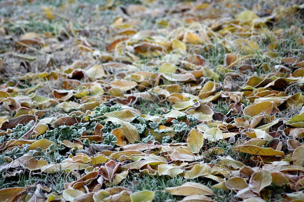 Bodenfrost Wühlmaus