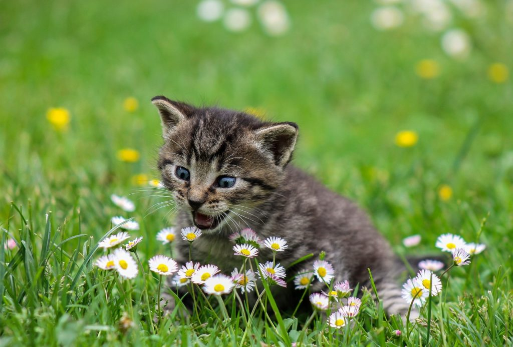 Katze gegen Wühlmaus