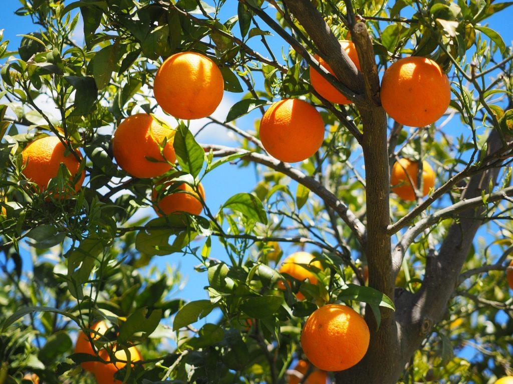 Wühlmausgitter Obstbäume